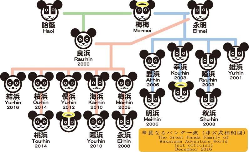 panda201612.jpg